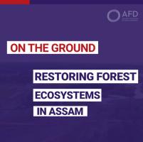 Restoring forest ecosystem in Assam