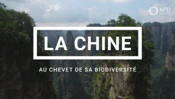 La Chine au chevet de sa biodiversité