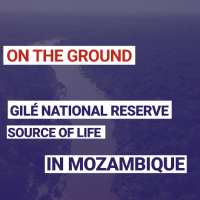 Gilé National Reserve : Source of life in Mozambique