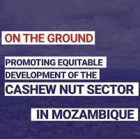 Promoting equitable development of the cashew nut sector in Mozambique