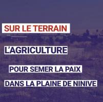 Irak : l'agriculture pour semer la paix dans la plaine de Ninive