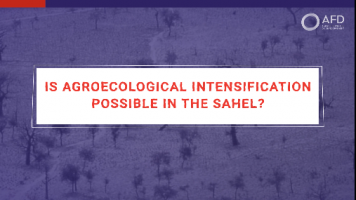 Is agroecological intensification possible in the Sahel?