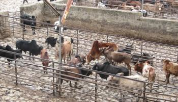 A new public abattoir for Addis Ababa / AFD