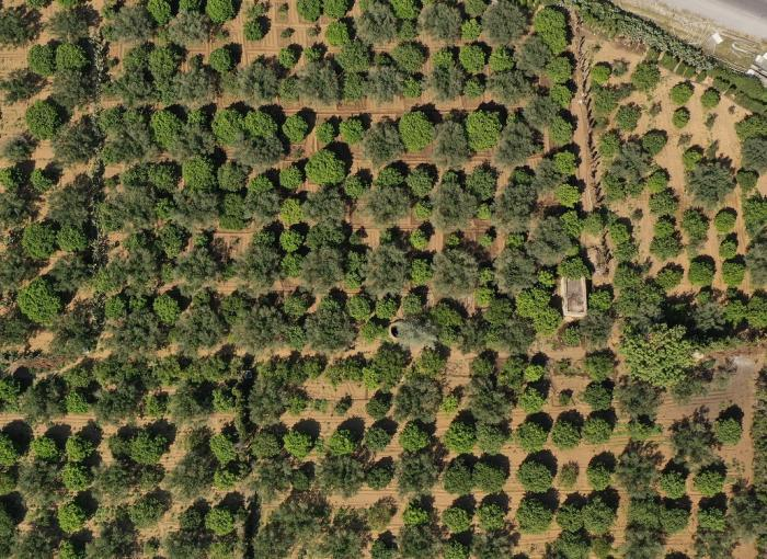 Tunisie champ agriculture adaptation changement climatique
