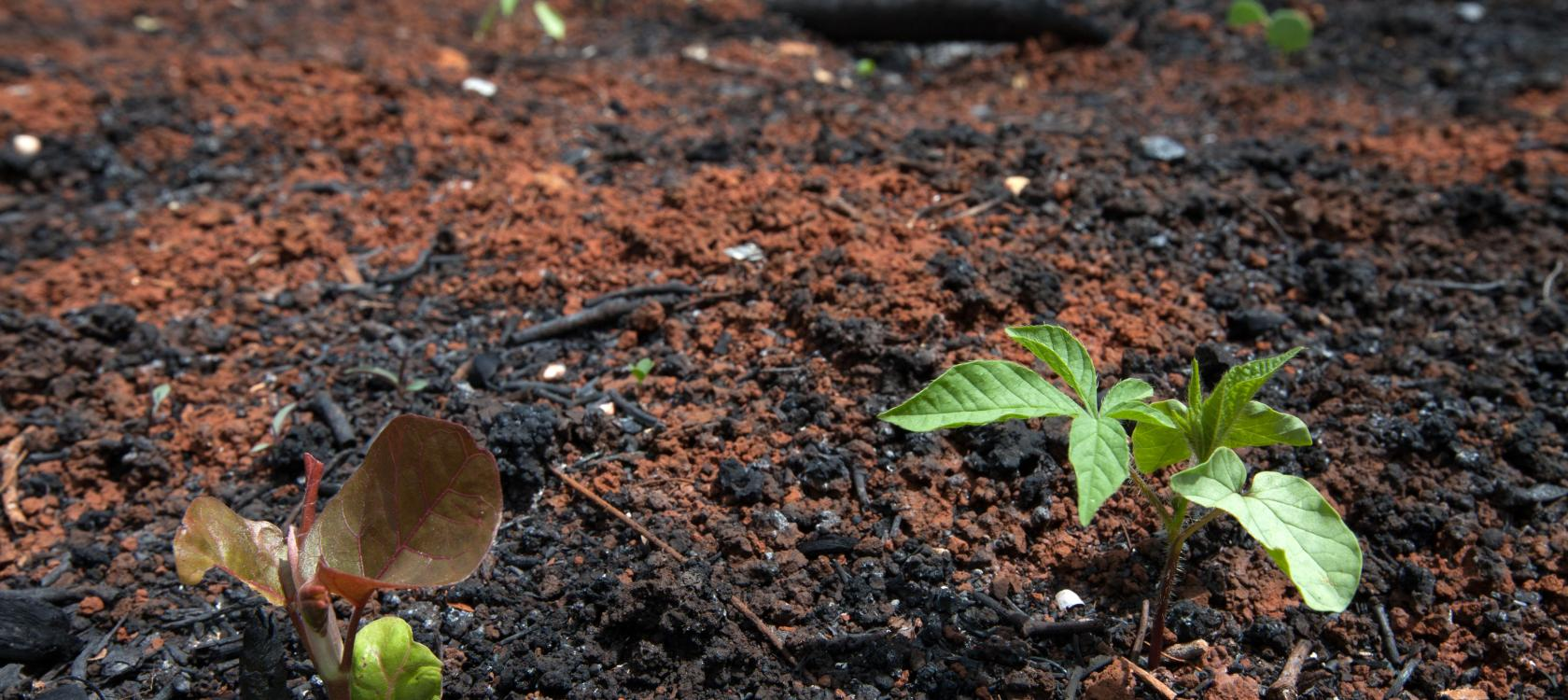 In Mexico, plants grow again after deforestation