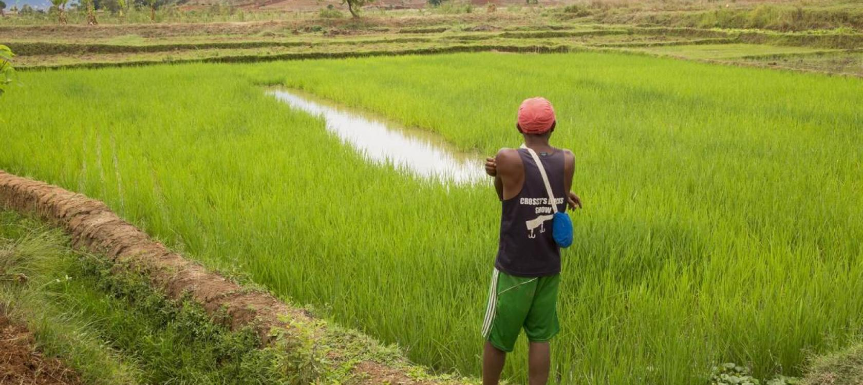 improving land tenure security, producers, farmers, Madagascar