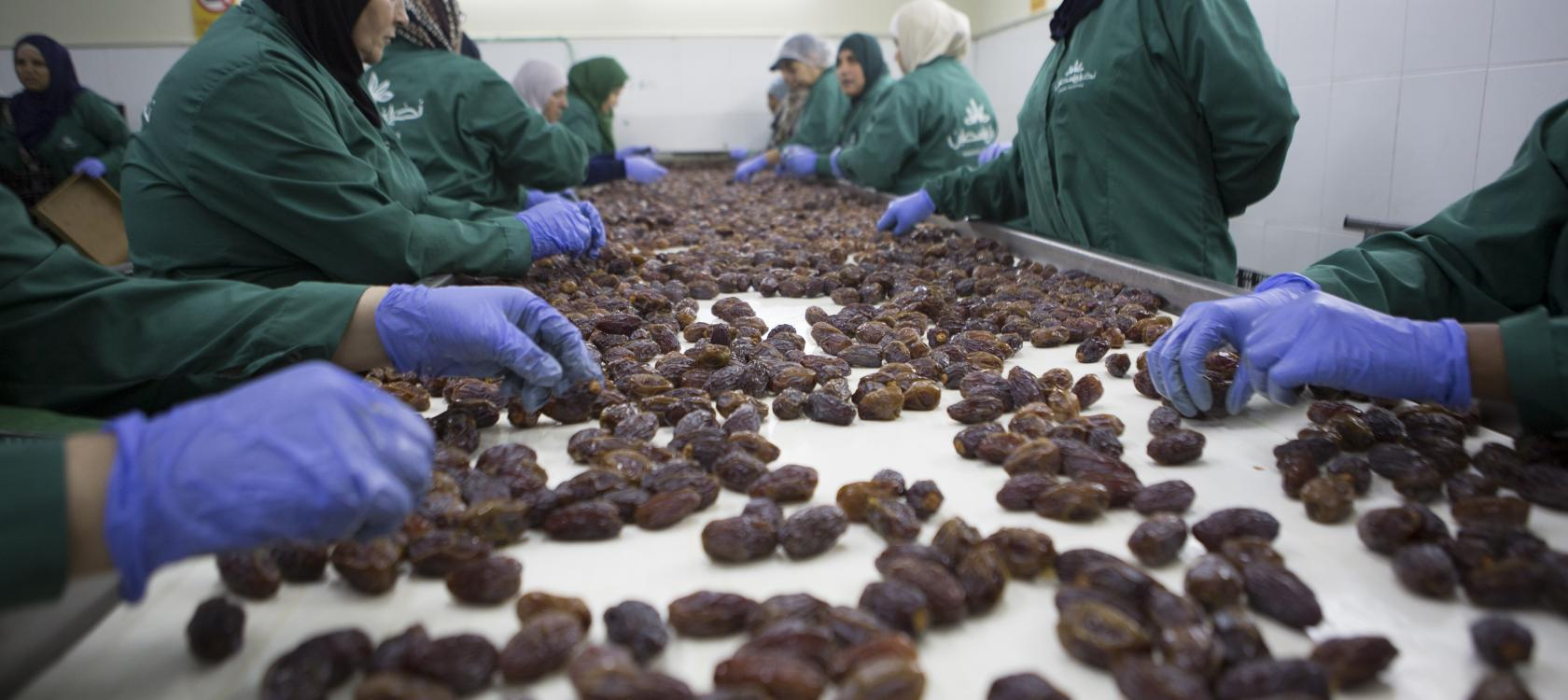 Processing dates factories, Nakheel, Palestine
