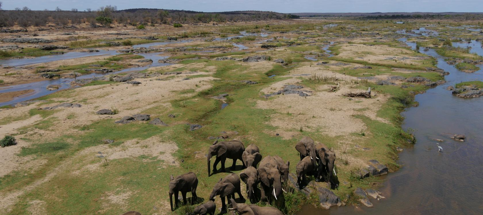 elephants, poaching, mozambique