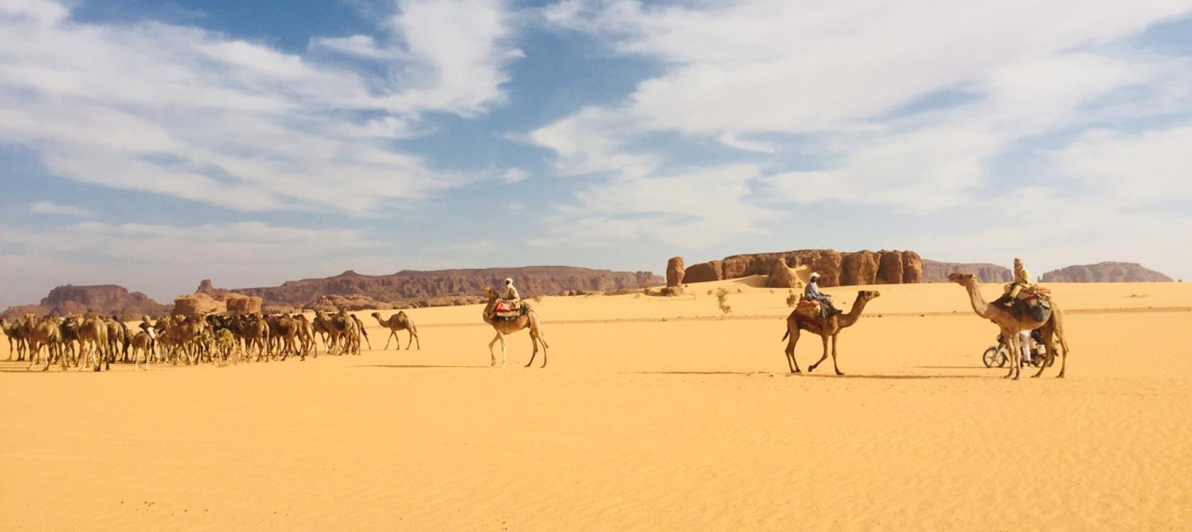desert, camels, landscape, Chad