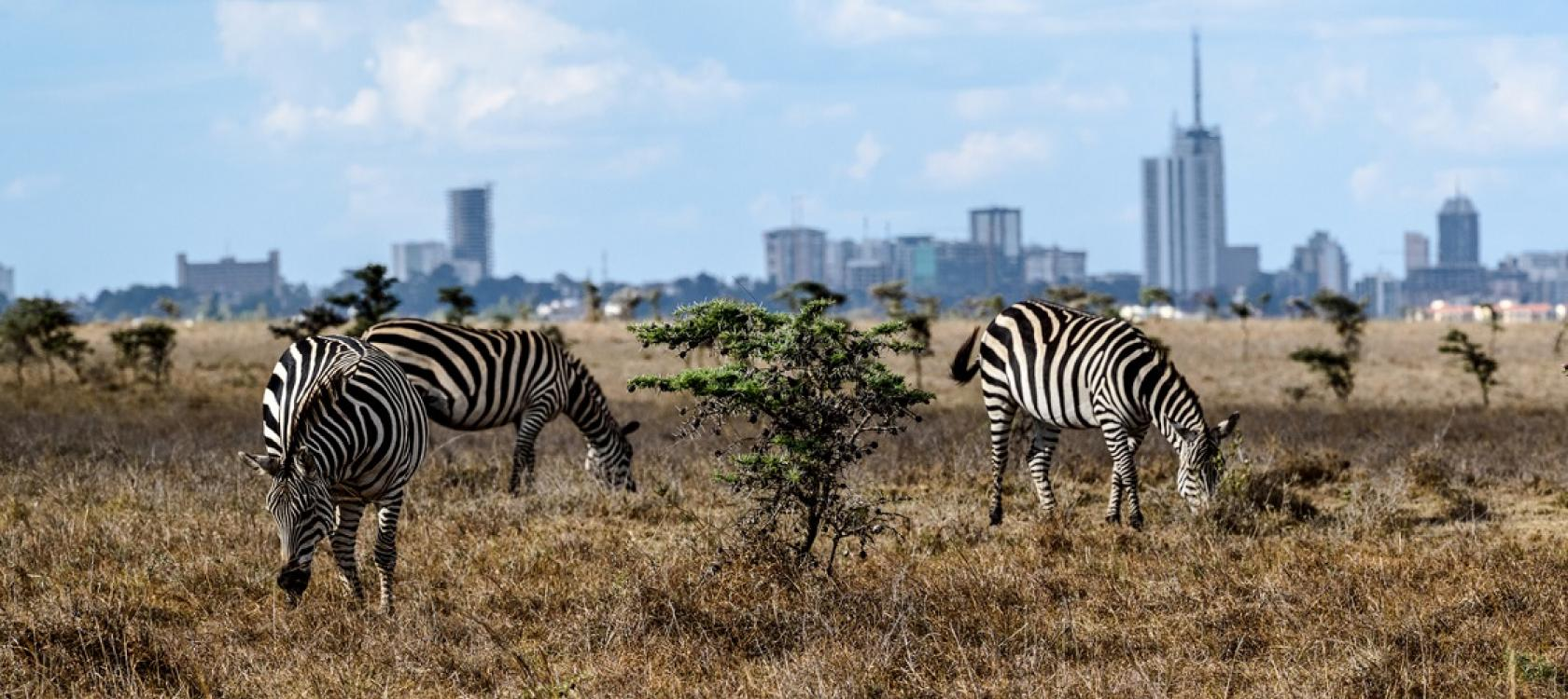 Rencontres Kenya Nairobi