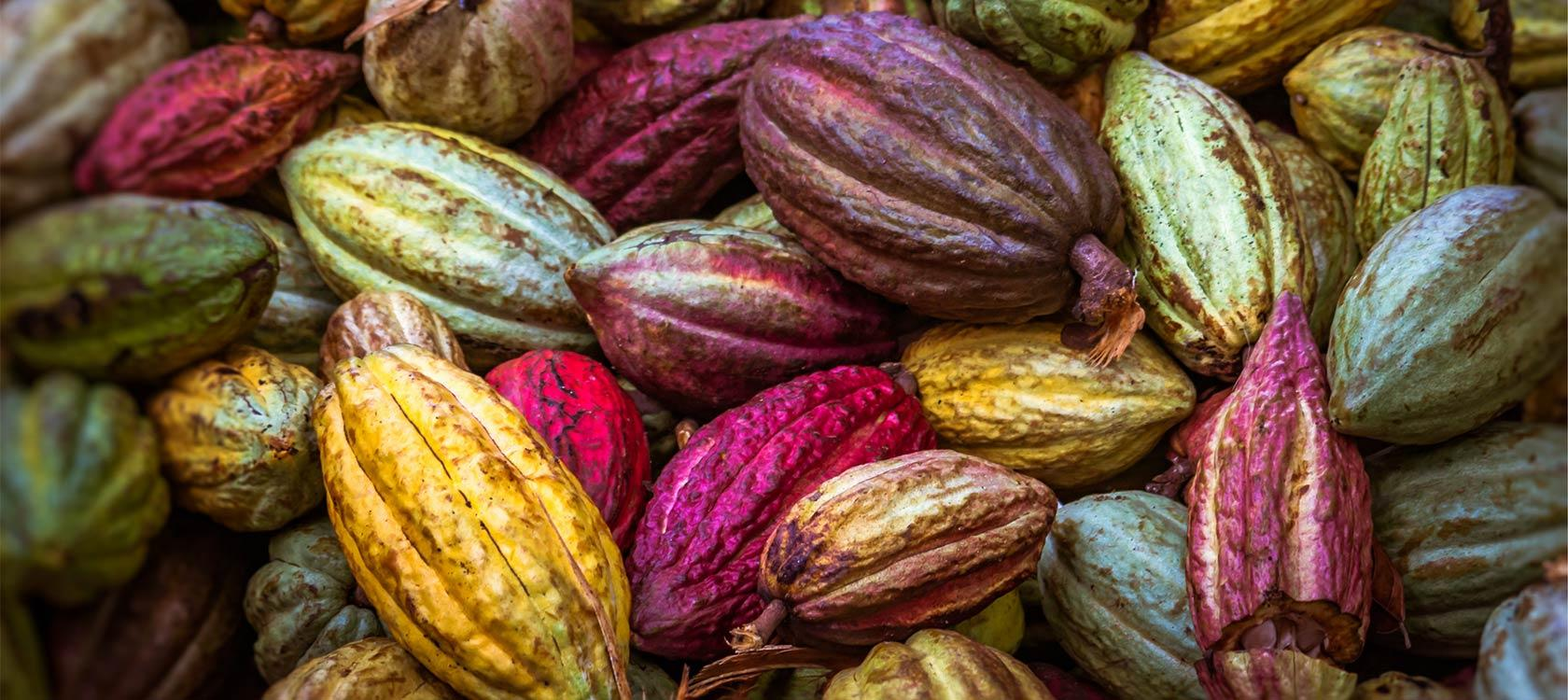 The Challenges Facing Ghana's Cocoa Sector | AFD - Agence