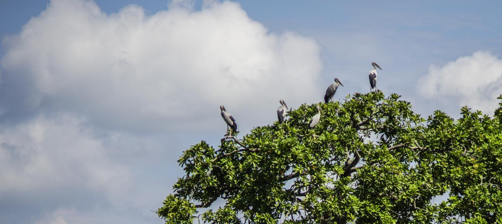 Projet Assam sur la conservation des forêts et de la biodiversité (APFBC)