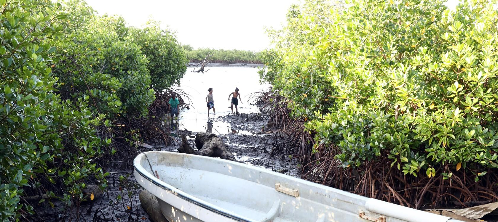 Fiji mangroves with AFD project RESCCUE